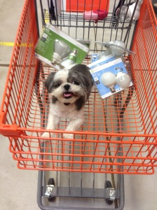 First trip to Home Depot. (We're planning to replace all lightbulbs with CFLs)